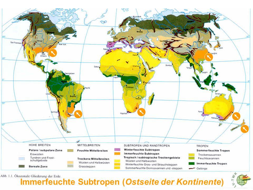 Immerfeuchte Subtropen (Ostseite der Kontinente)