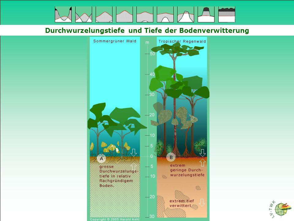 Durchwurzelungstiefe und Tiefe der Bodenverwitterung