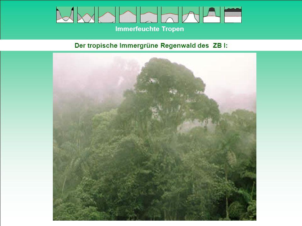 Der tropische Immergrüne Regenwald des ZB I:
