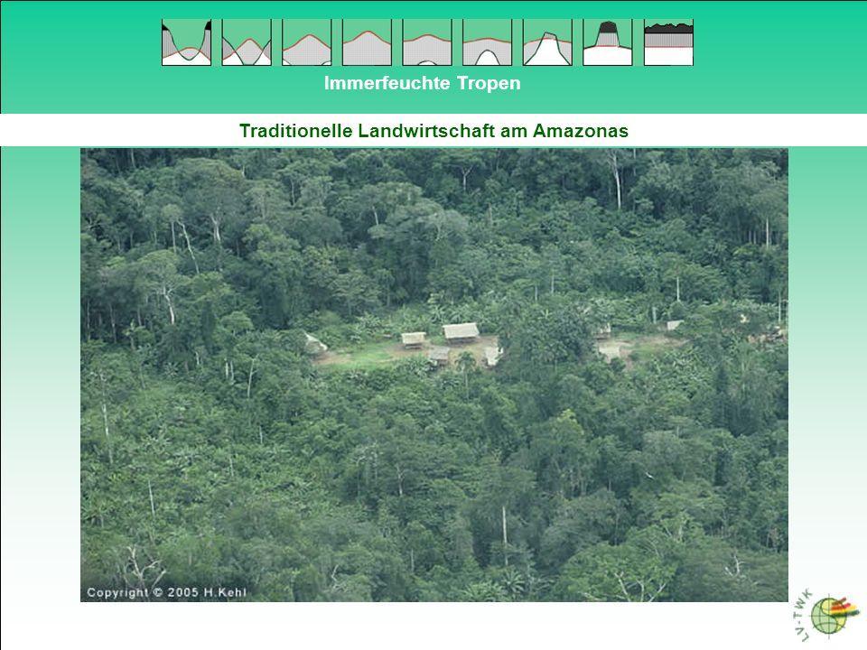 Traditionelle Landwirtschaft am Amazonas
