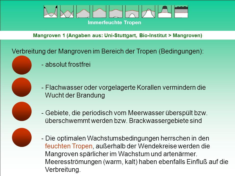 Mangroven 1 (Angaben aus: Uni-Stuttgart, Bio-Institut > Mangroven)
