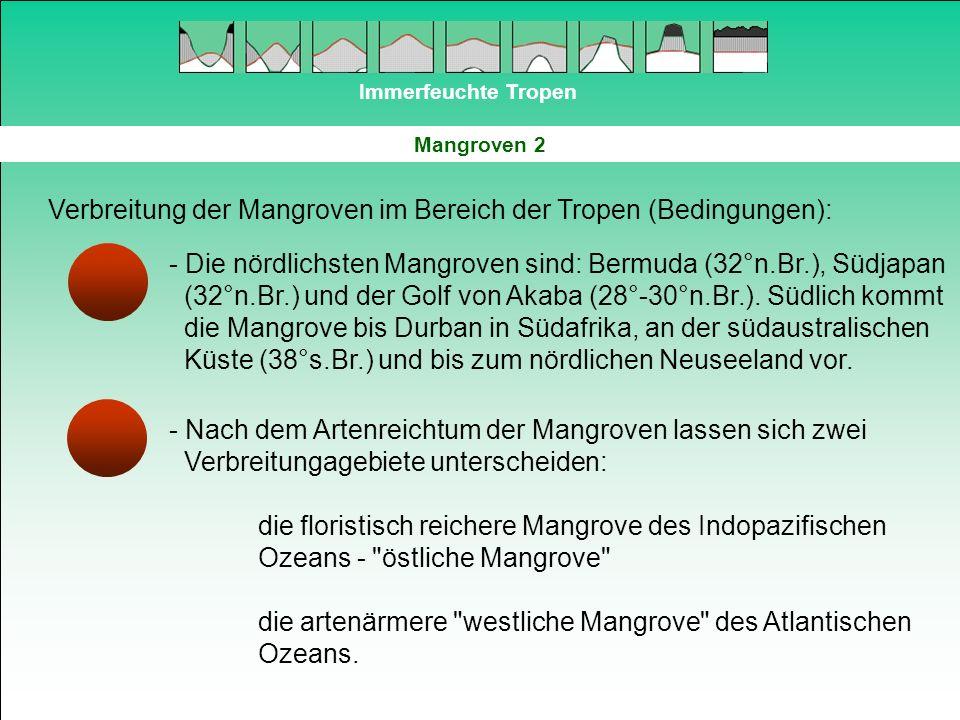 Verbreitung der Mangroven im Bereich der Tropen (Bedingungen):