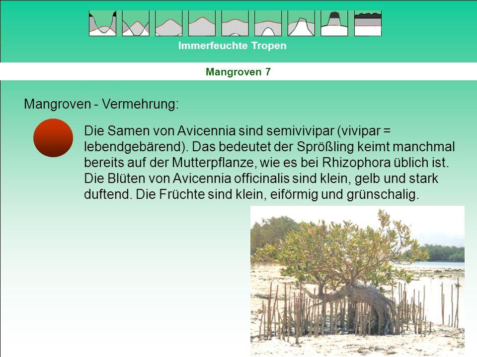 Mangroven - Vermehrung: