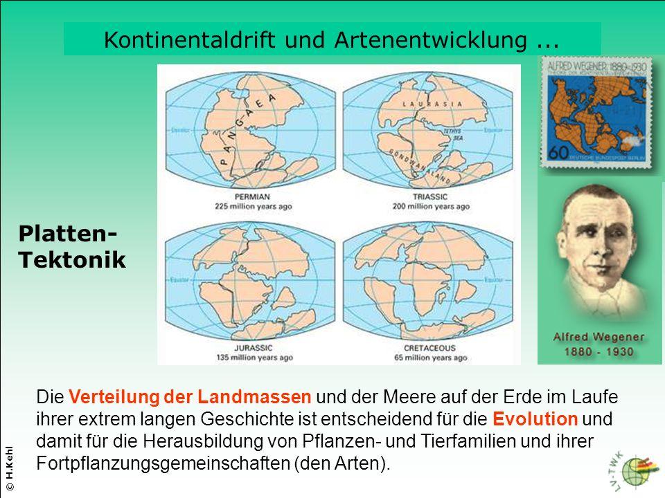 Kontinentaldrift und Artenentwicklung ...
