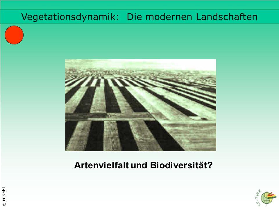 Vegetationsdynamik: Die modernen Landschaften