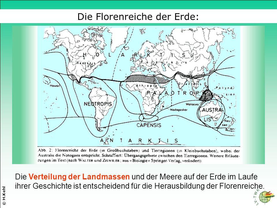 Die Florenreiche der Erde: