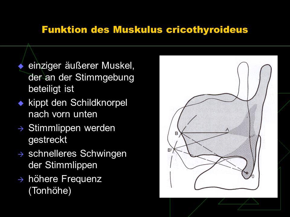Funktion des Muskulus cricothyroideus
