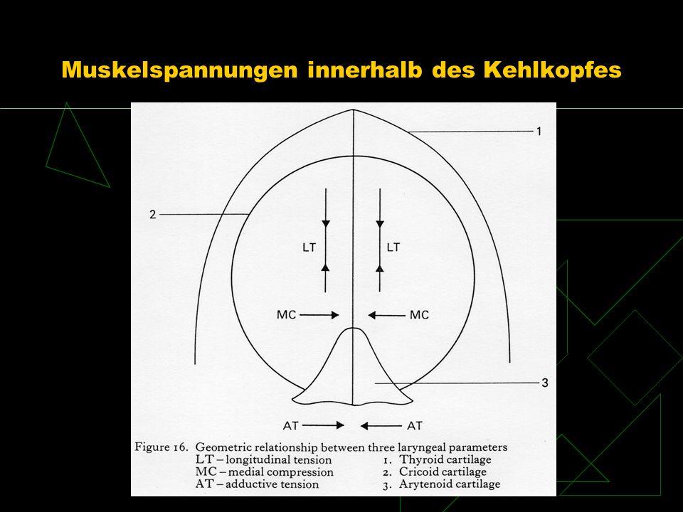 Muskelspannungen innerhalb des Kehlkopfes