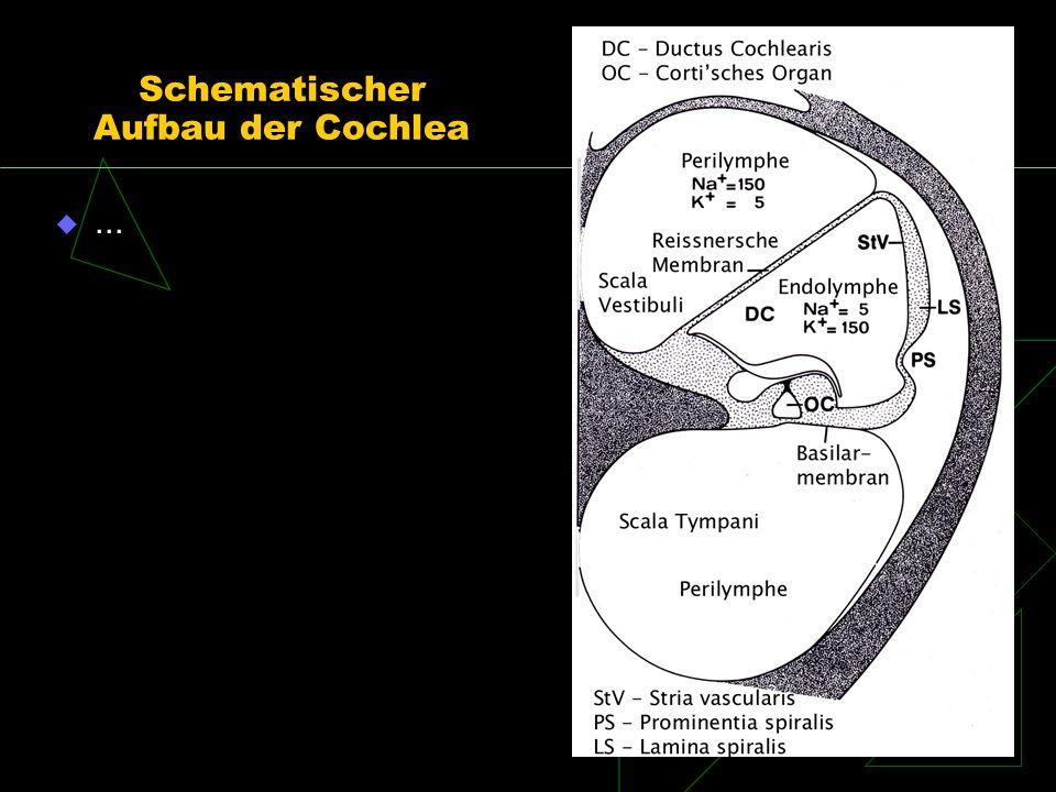 Schematischer Aufbau der Cochlea