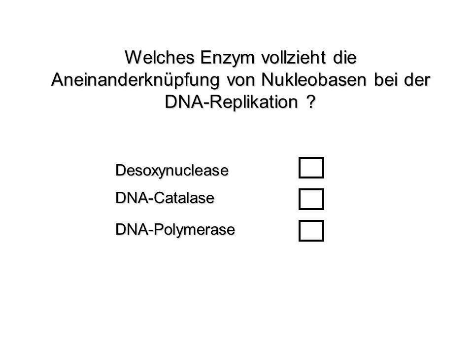 Welches Enzym vollzieht die Aneinanderknüpfung von Nukleobasen bei der DNA-Replikation