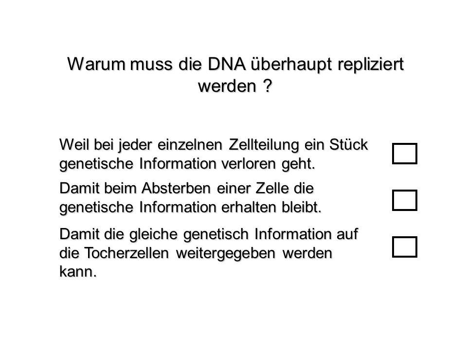 Warum muss die DNA überhaupt repliziert werden