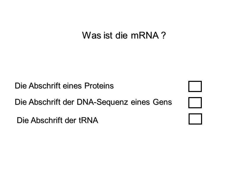 Was ist die mRNA Die Abschrift eines Proteins