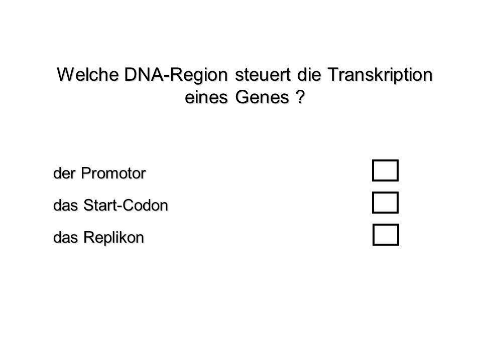 Welche DNA-Region steuert die Transkription eines Genes