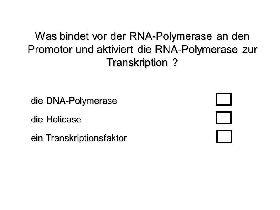 Was bindet vor der RNA-Polymerase an den Promotor und aktiviert die RNA-Polymerase zur Transkription