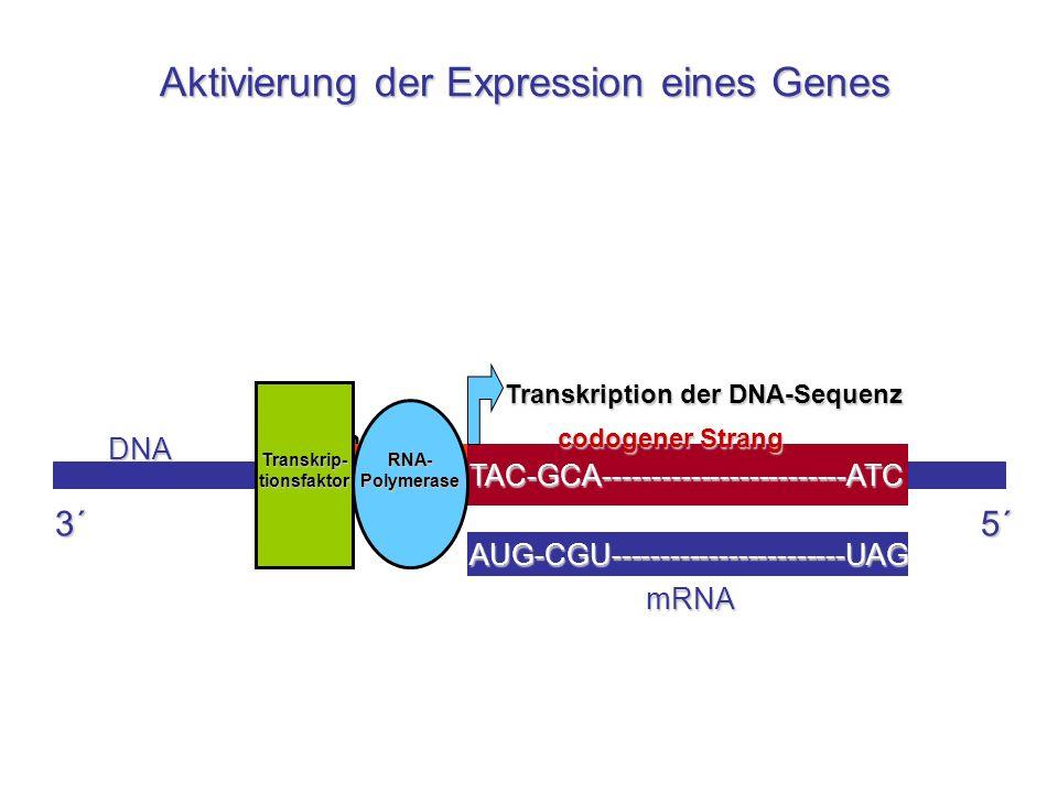 Transkrip-tionsfaktor