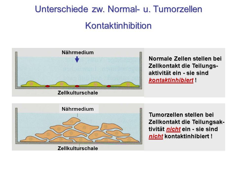 Unterschiede zw. Normal- u. Tumorzellen