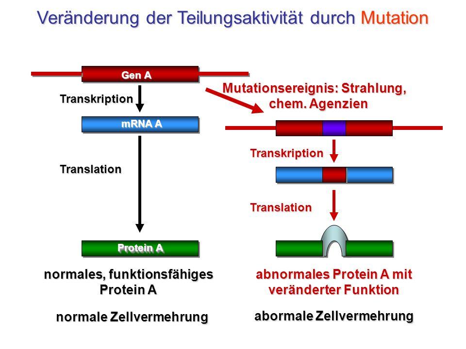 Veränderung der Teilungsaktivität durch Mutation
