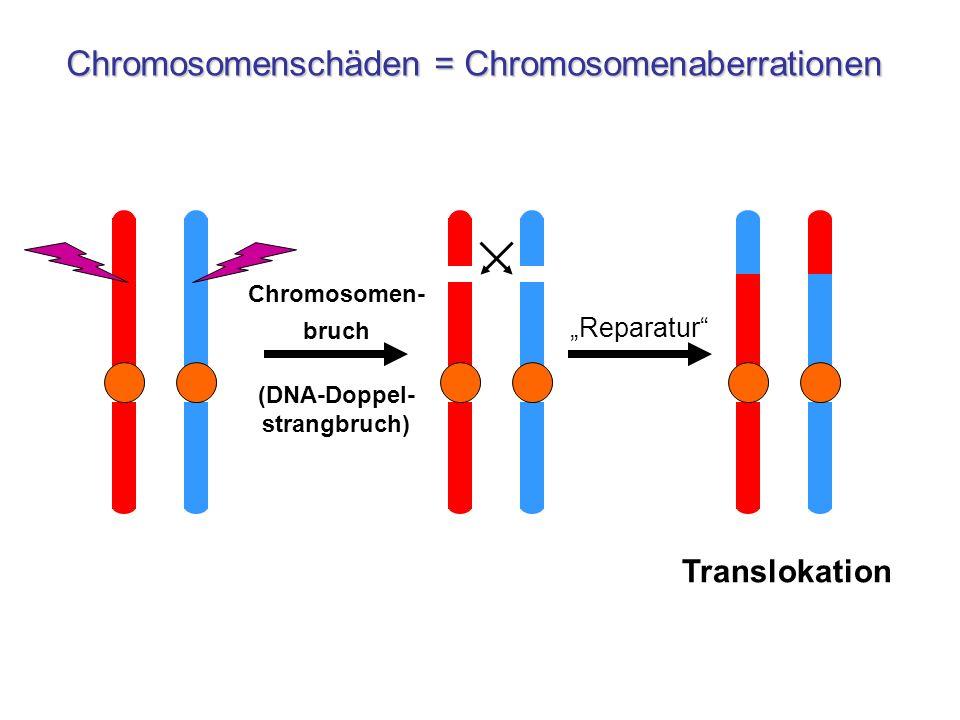 (DNA-Doppel-strangbruch)