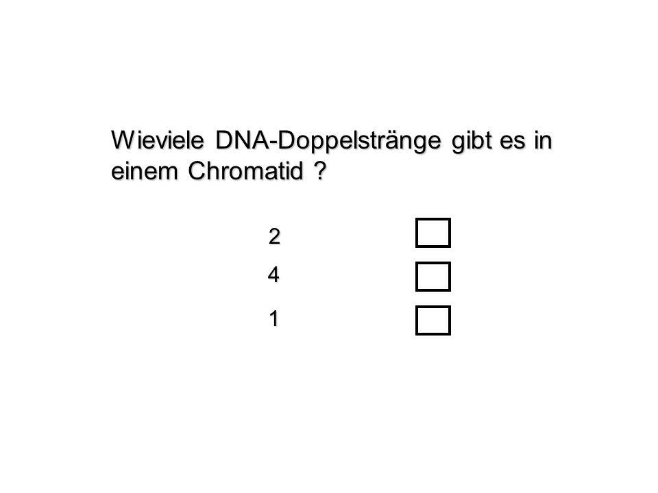 Wieviele DNA-Doppelstränge gibt es in einem Chromatid