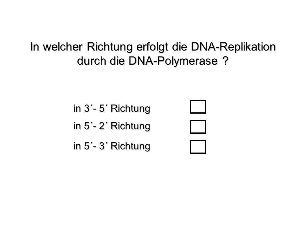 In welcher Richtung erfolgt die DNA-Replikation durch die DNA-Polymerase