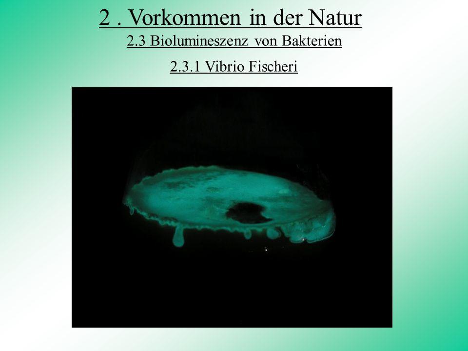 2.3 Biolumineszenz von Bakterien
