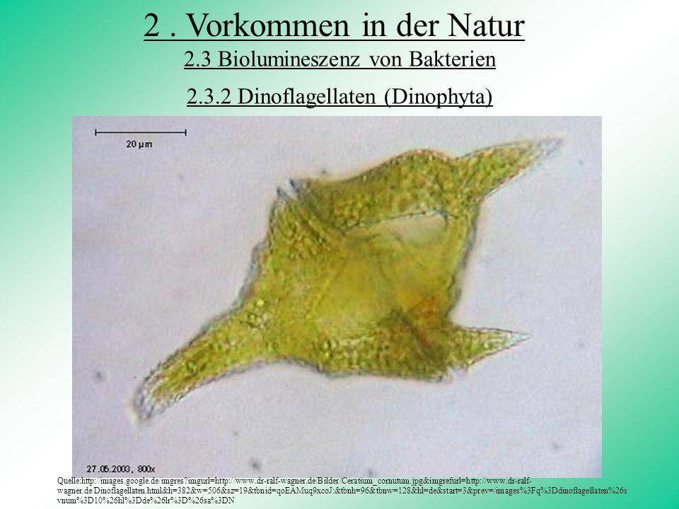 2 . Vorkommen in der Natur 2.3 Biolumineszenz von Bakterien