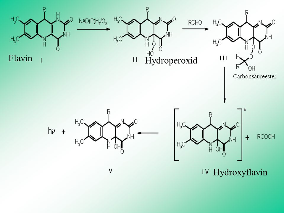 Flavin Hydroperoxid Carbonsäureester Hydroxyflavin