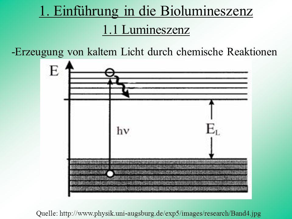 1. Einführung in die Biolumineszenz