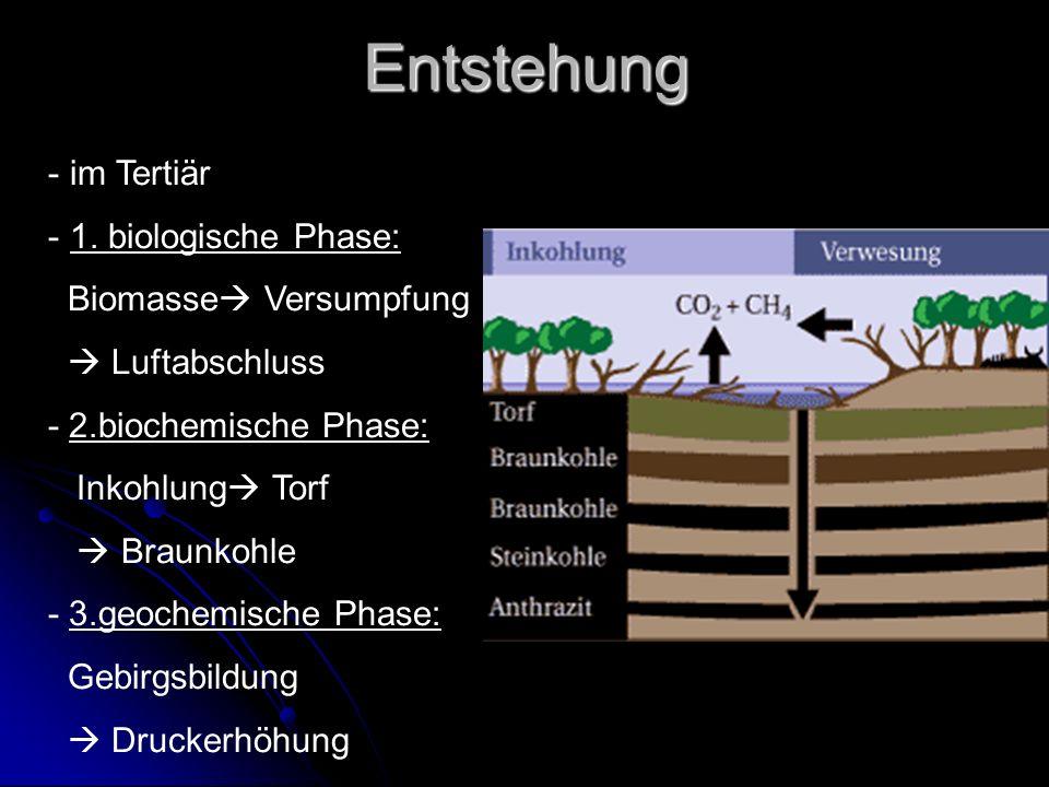Entstehung im Tertiär 1. biologische Phase: Biomasse Versumpfung
