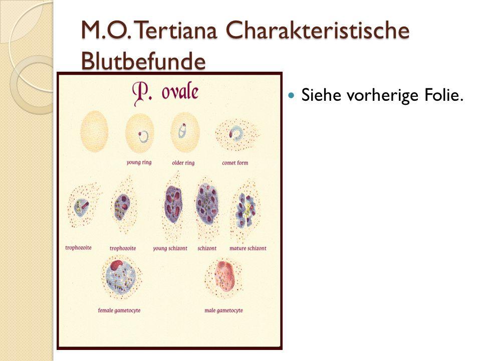 M.O. Tertiana Charakteristische Blutbefunde