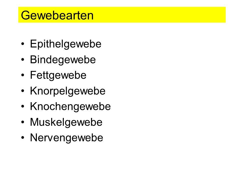 Gewebearten Epithelgewebe Bindegewebe Fettgewebe Knorpelgewebe