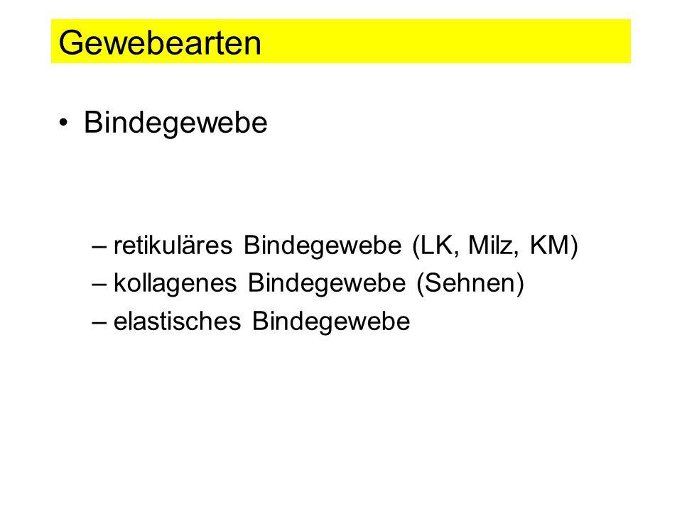 Gewebearten Bindegewebe retikuläres Bindegewebe (LK, Milz, KM)