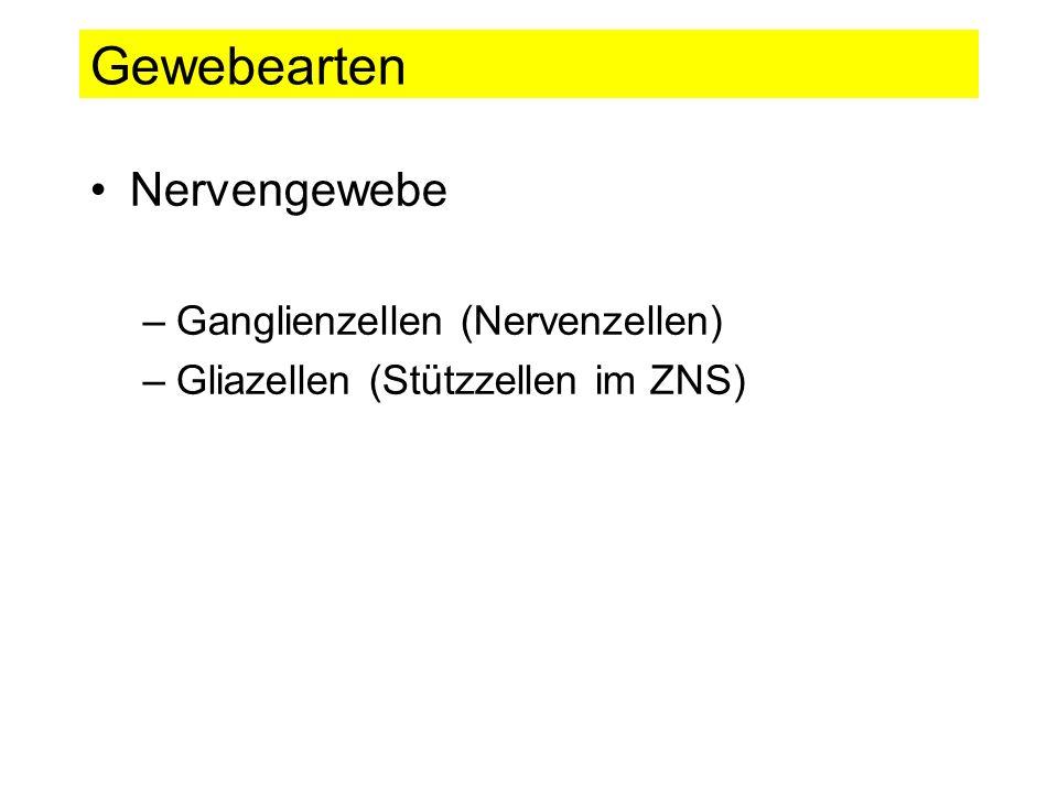 Gewebearten Nervengewebe Ganglienzellen (Nervenzellen)