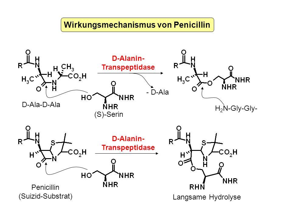 Wirkungsmechanismus von Penicillin