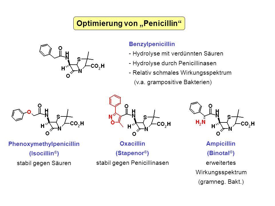 """Optimierung von """"Penicillin Phenoxymethylpenicillin"""
