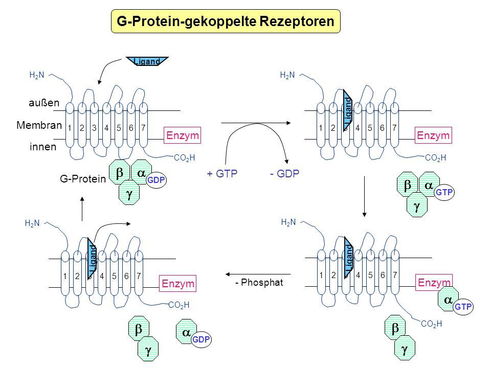 G-Protein-gekoppelte Rezeptoren