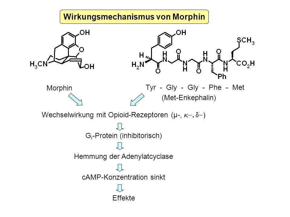 Wirkungsmechanismus von Morphin