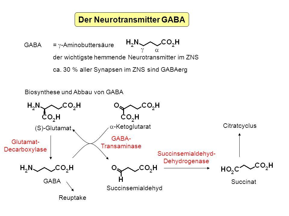 Der Neurotransmitter GABA