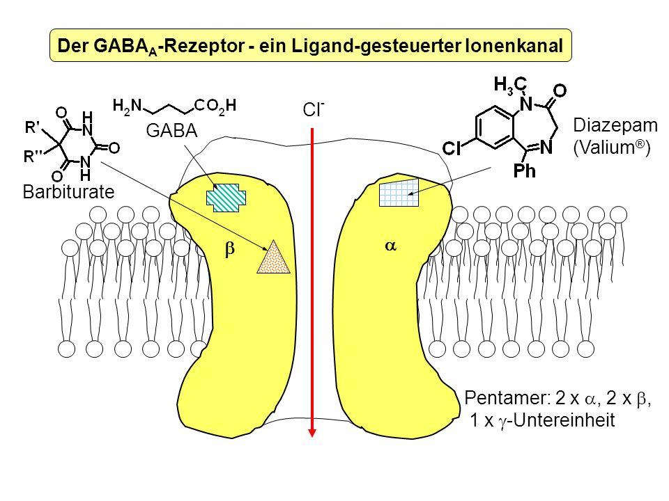 Der GABAA-Rezeptor - ein Ligand-gesteuerter Ionenkanal