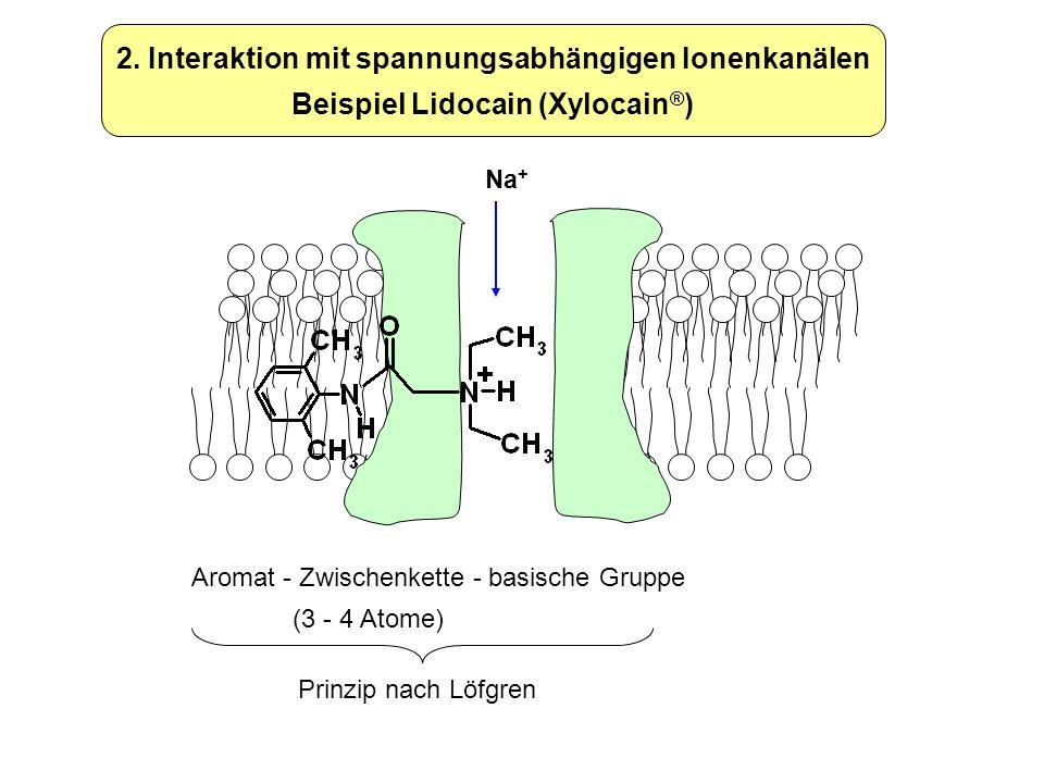 2. Interaktion mit spannungsabhängigen Ionenkanälen