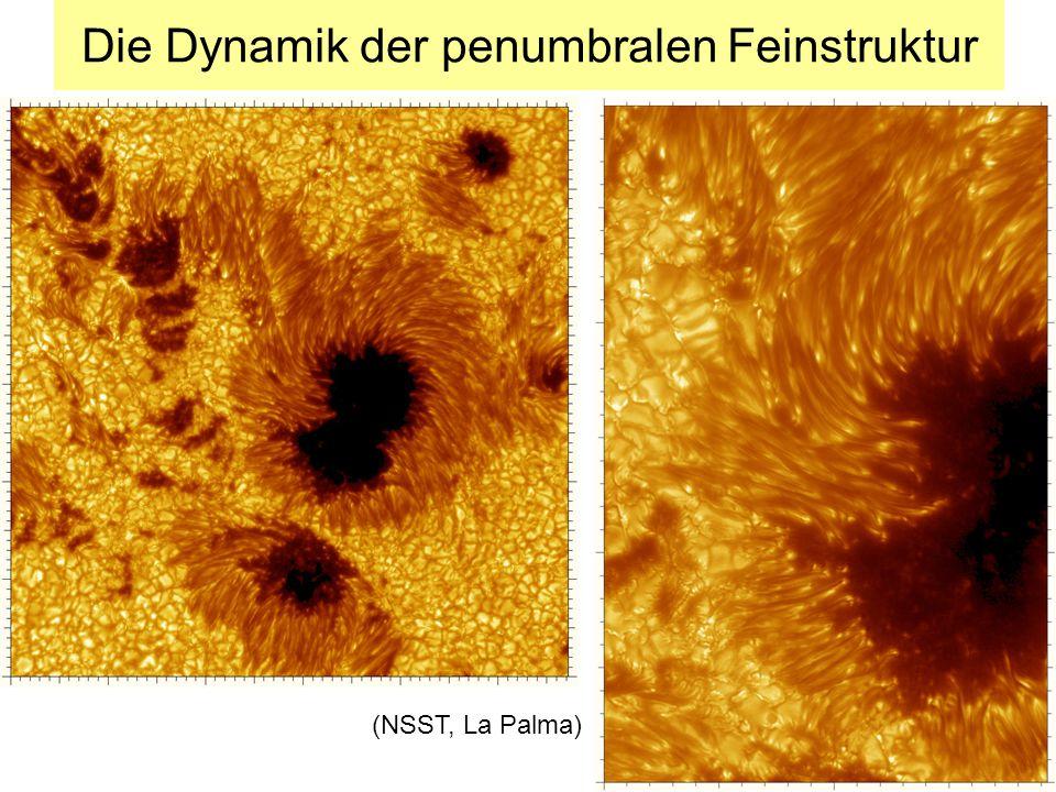 Die Dynamik der penumbralen Feinstruktur