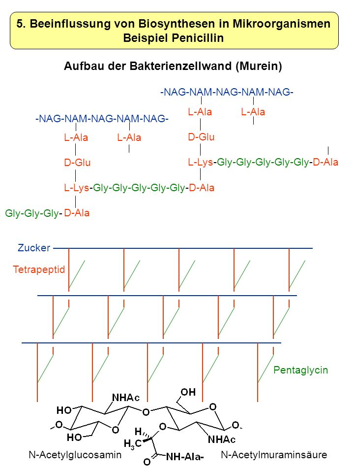 5. Beeinflussung von Biosynthesen in Mikroorganismen