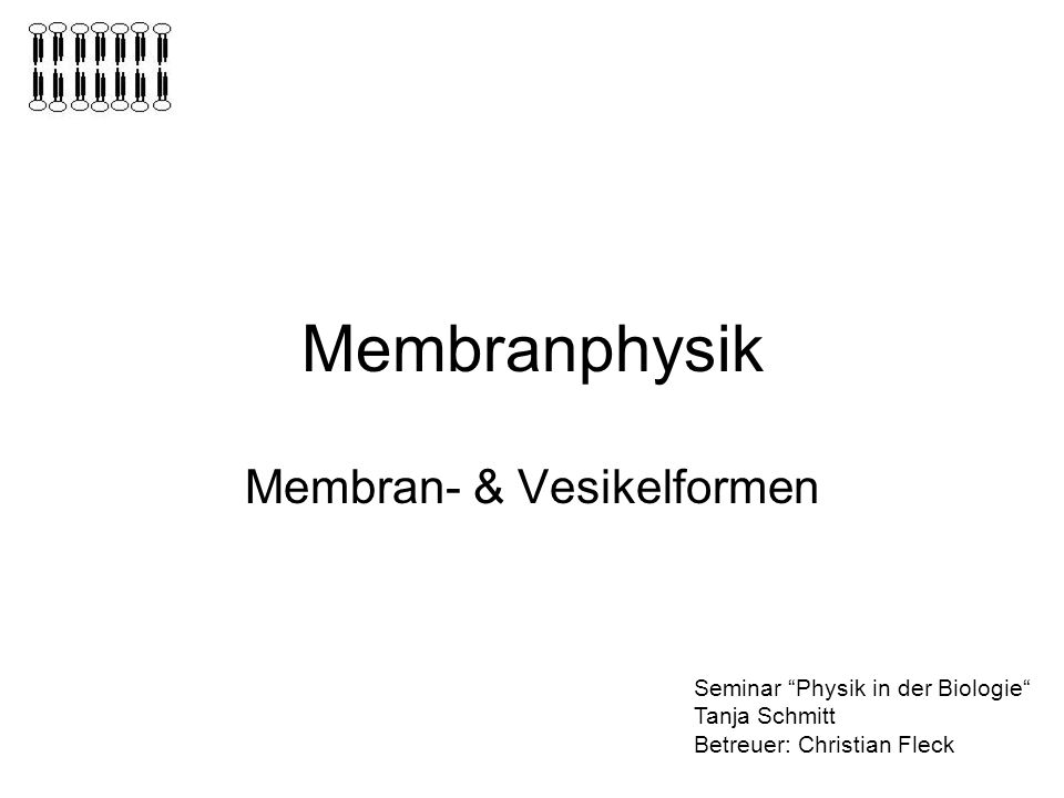 Membran- & Vesikelformen