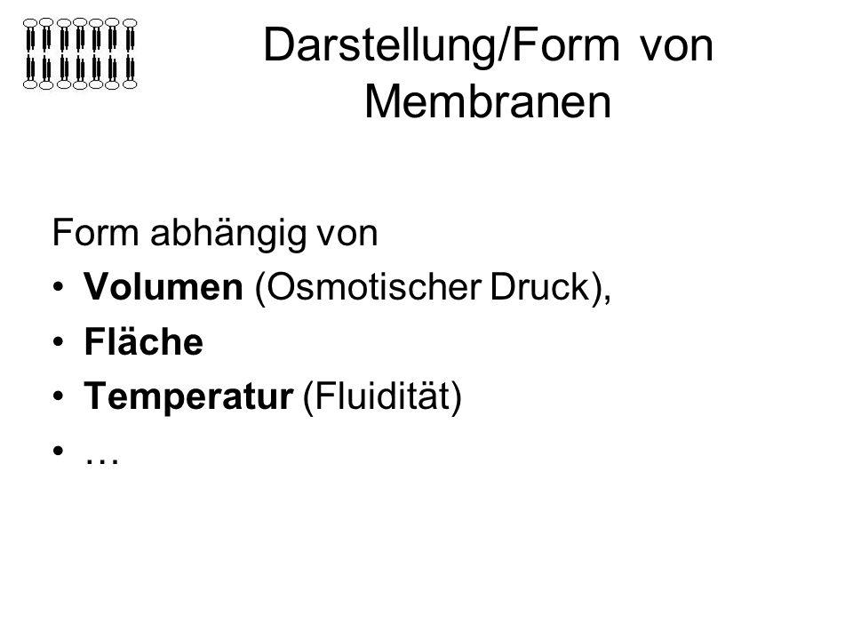Darstellung/Form von Membranen