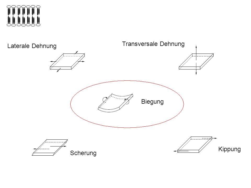 Transversale Dehnung Laterale Dehnung Biegung Biegung Kippung Scherung