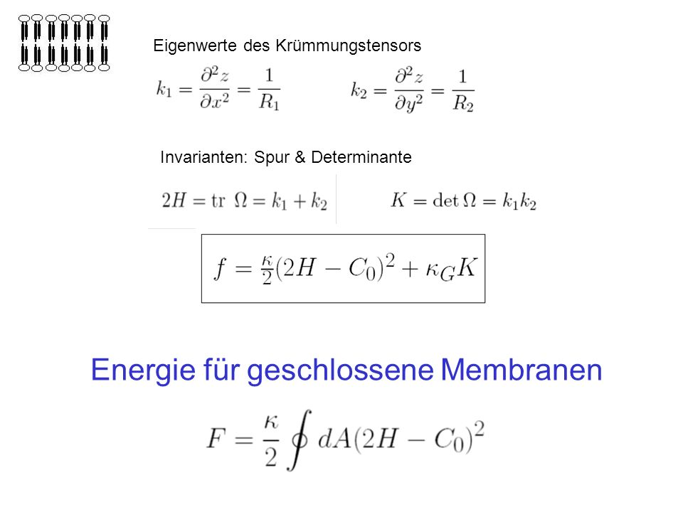 Energie für geschlossene Membranen