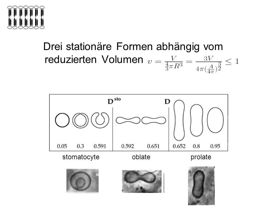 Drei stationäre Formen abhängig vom reduzierten Volumen v