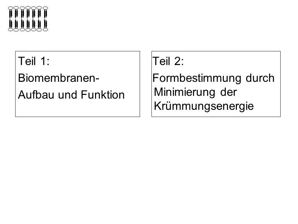 Teil 1: Biomembranen- Aufbau und Funktion.