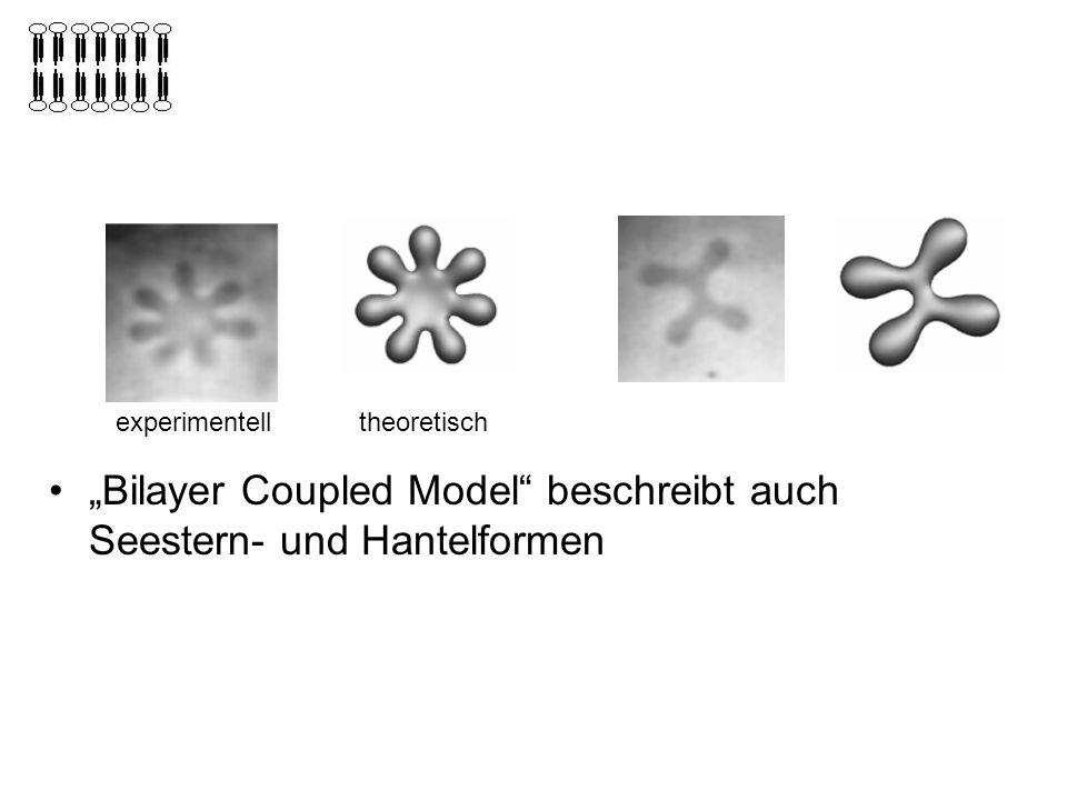 """""""Bilayer Coupled Model beschreibt auch Seestern- und Hantelformen"""