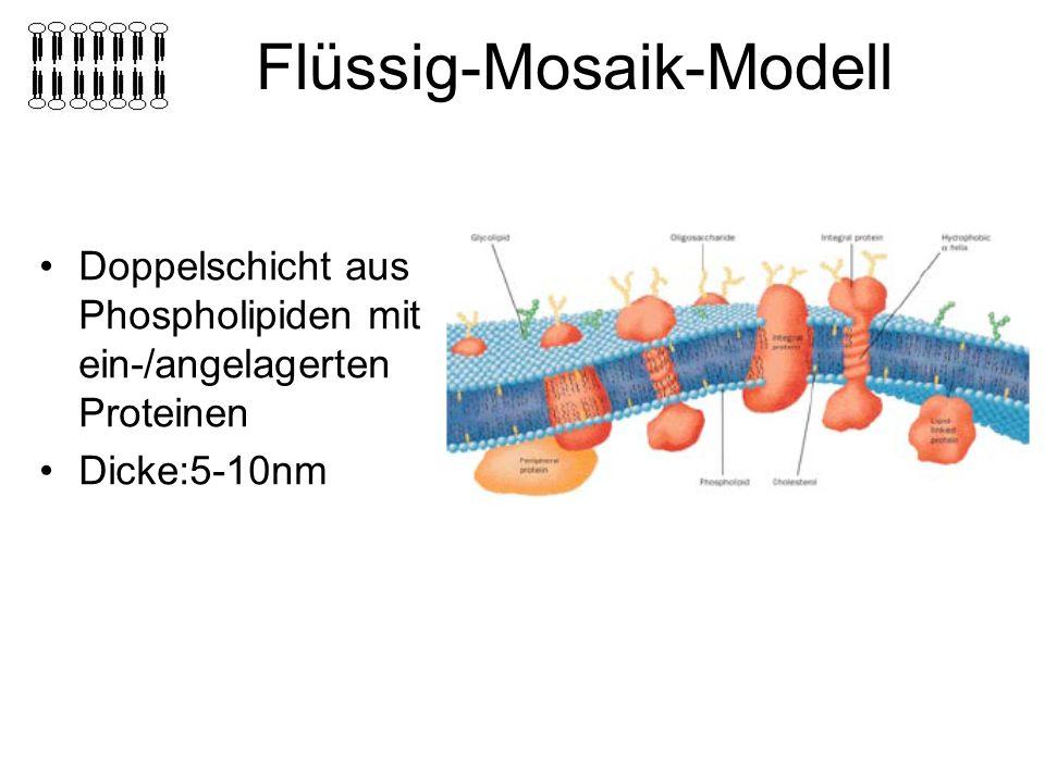 Flüssig-Mosaik-Modell